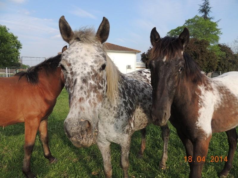 Mes chevaux, un mélange d'un peu tout le monde! - Page 8 Opium_24
