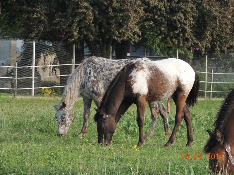 Mes chevaux, un mélange d'un peu tout le monde! - Page 8 Opium_25