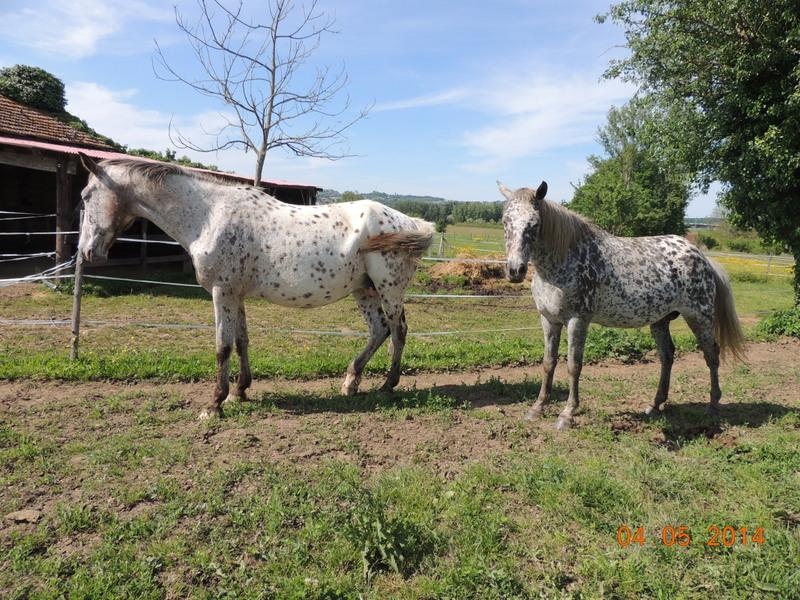 Mes chevaux, un mélange d'un peu tout le monde! - Page 9 Opium_27