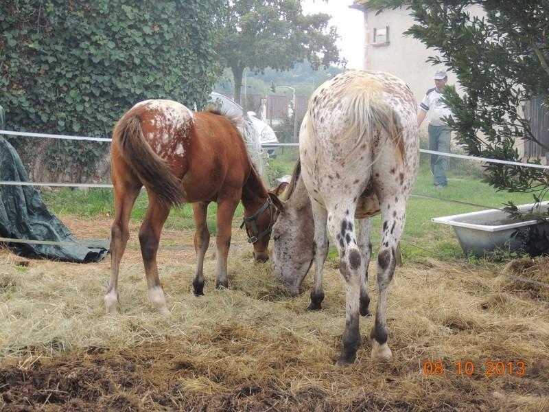Mes chevaux, un mélange d'un peu tout le monde! - Page 8 Quarin20