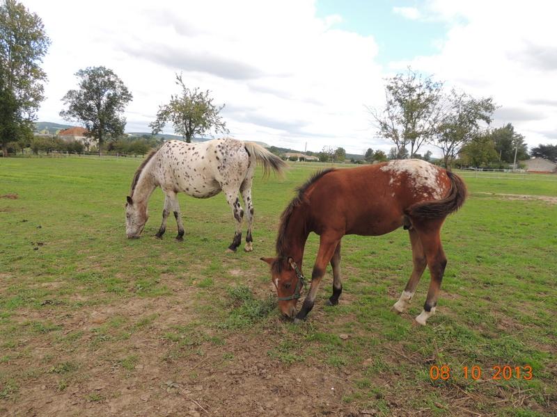 Mes chevaux, un mélange d'un peu tout le monde! - Page 8 Quarin21