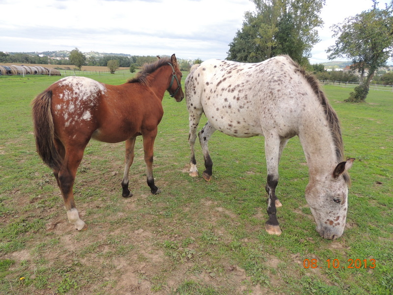 Mes chevaux, un mélange d'un peu tout le monde! - Page 8 Quarin22