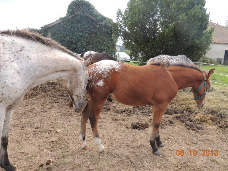 Mes chevaux, un mélange d'un peu tout le monde! - Page 8 Quarin23