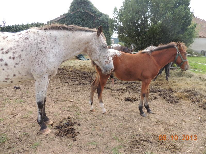 Mes chevaux, un mélange d'un peu tout le monde! - Page 8 Quarin24