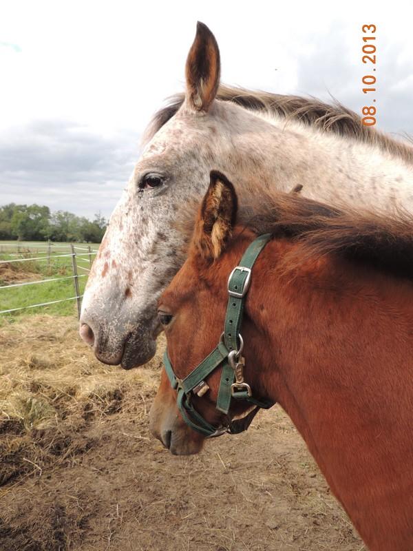 Mes chevaux, un mélange d'un peu tout le monde! - Page 8 Quarin25