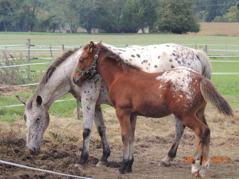 Mes chevaux, un mélange d'un peu tout le monde! - Page 8 Quarin26