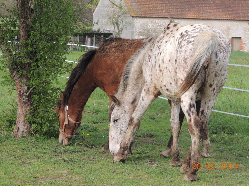 Mes chevaux, un mélange d'un peu tout le monde! - Page 8 Quarin32