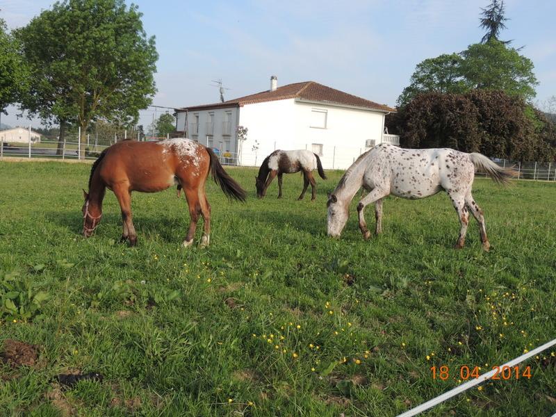 Mes chevaux, un mélange d'un peu tout le monde! - Page 8 Quarin39