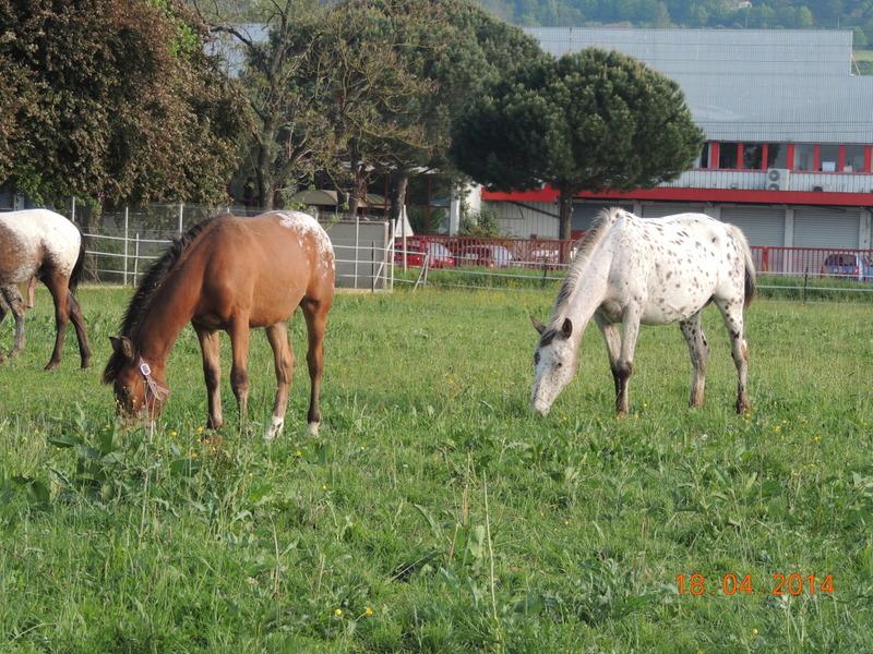 Mes chevaux, un mélange d'un peu tout le monde! - Page 8 Quarin40