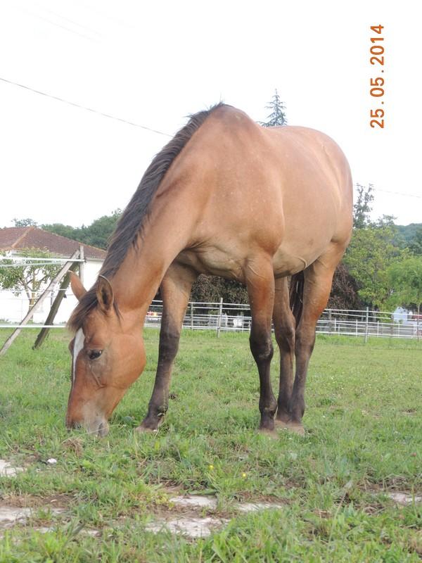 Les chevaux de l'Appaloosa IJ Farm - Page 2 Sun11