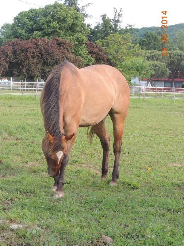 Les chevaux de l'Appaloosa IJ Farm - Page 2 Sun_810