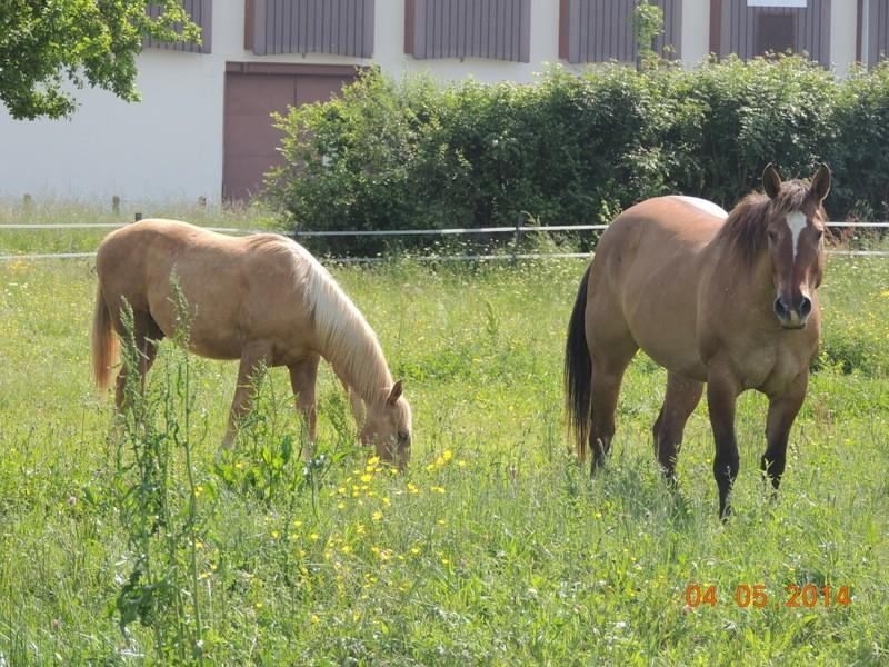 Mes chevaux, un mélange d'un peu tout le monde! - Page 9 Sun_et10