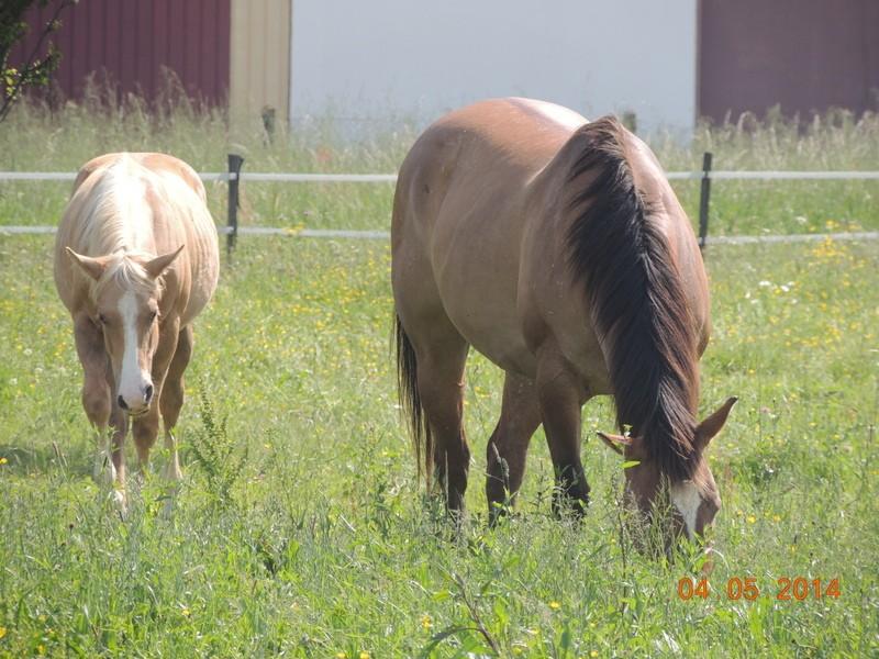 Mes chevaux, un mélange d'un peu tout le monde! - Page 9 Sun_et11