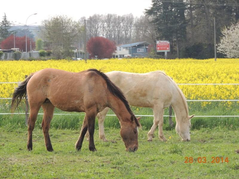 Mes chevaux, un mélange d'un peu tout le monde! - Page 8 Sunny_25