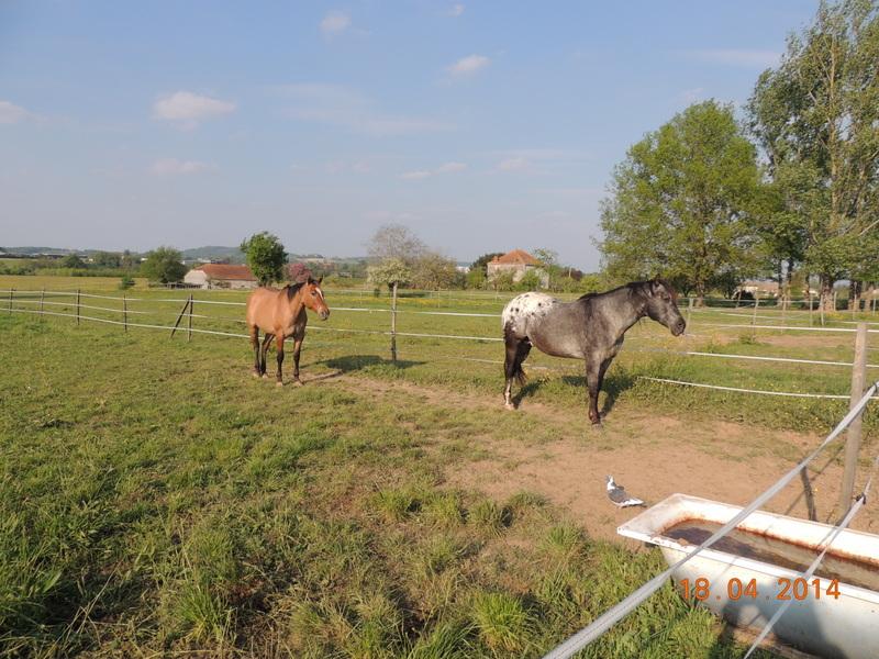 Mes chevaux, un mélange d'un peu tout le monde! - Page 8 Sunny_32