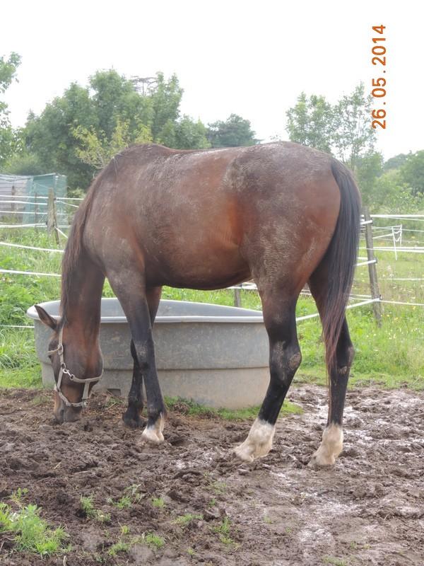 Mes chevaux, un mélange d'un peu tout le monde! - Page 10 Thaas11
