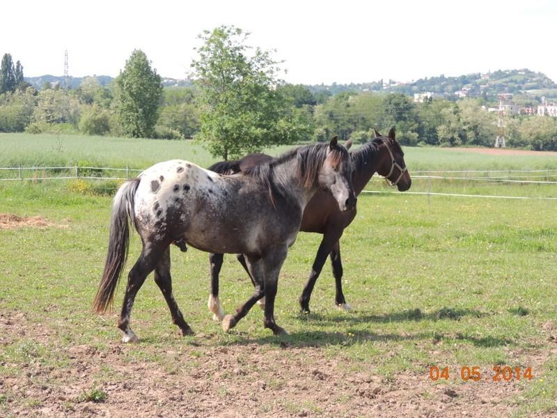 Mes chevaux, un mélange d'un peu tout le monde! - Page 9 Thaas_15
