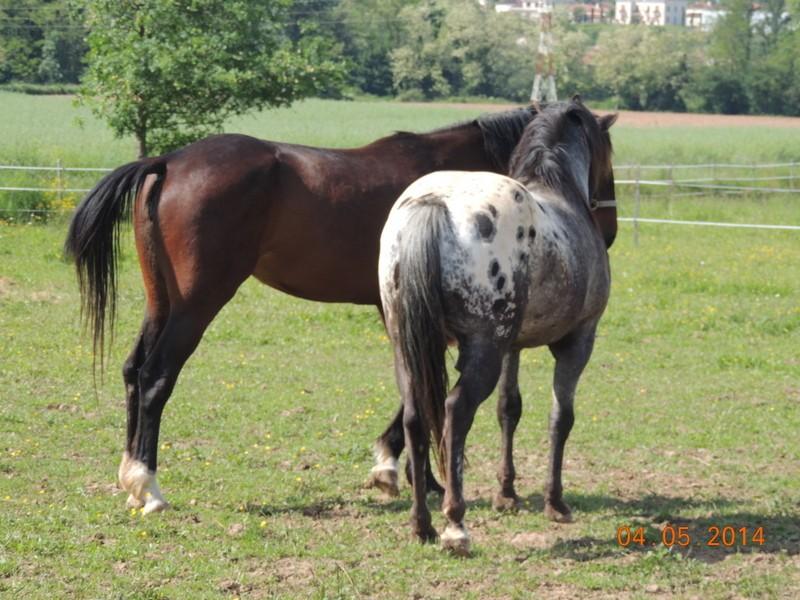 Mes chevaux, un mélange d'un peu tout le monde! - Page 9 Thaas_16