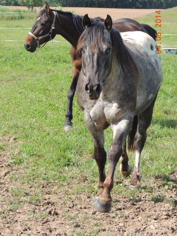 Mes chevaux, un mélange d'un peu tout le monde! - Page 9 Thaas_17