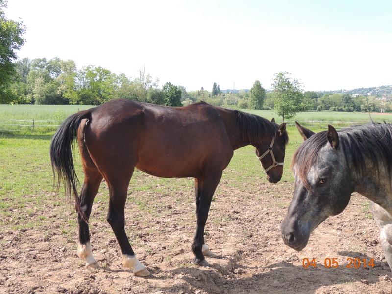 Mes chevaux, un mélange d'un peu tout le monde! - Page 9 Thaas_18