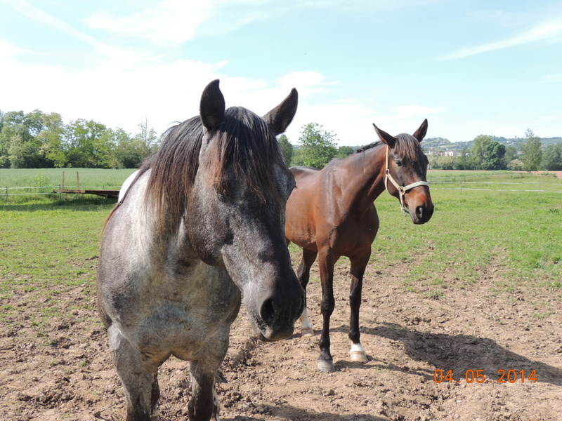 Mes chevaux, un mélange d'un peu tout le monde! - Page 9 Thaas_19