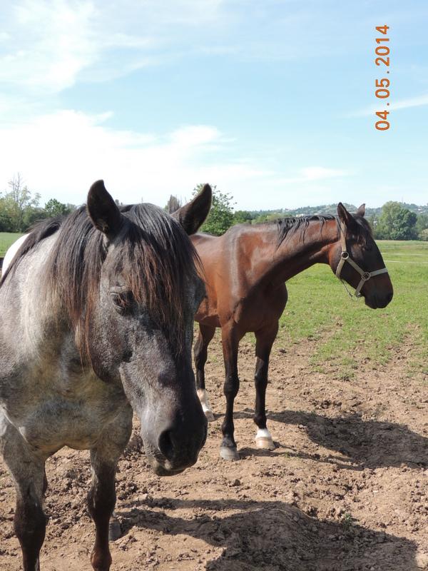 Mes chevaux, un mélange d'un peu tout le monde! - Page 9 Thaas_20