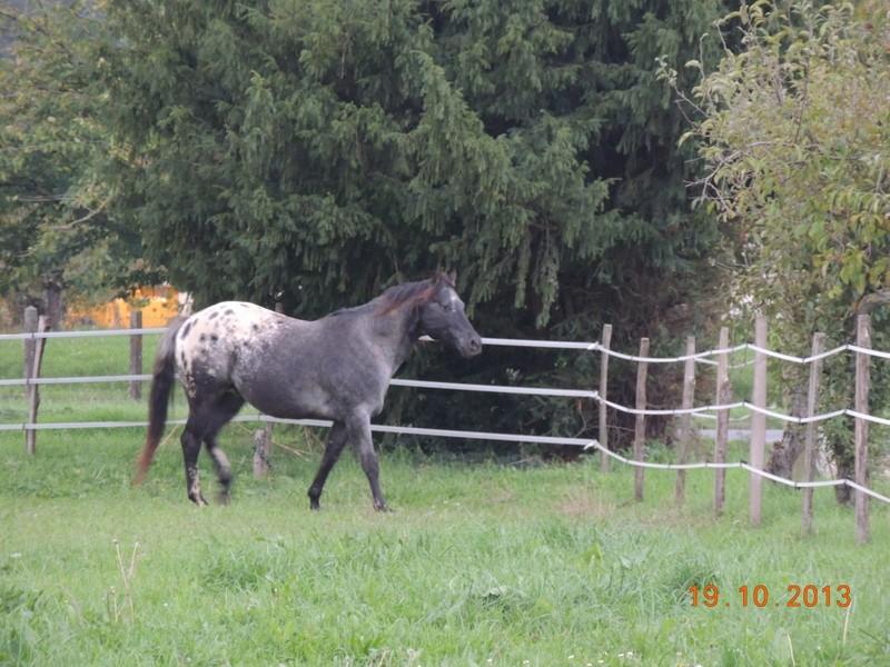 Mes chevaux, un mélange d'un peu tout le monde! - Page 8 Undy10