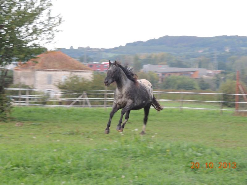 Mes chevaux, un mélange d'un peu tout le monde! - Page 8 Undy_110