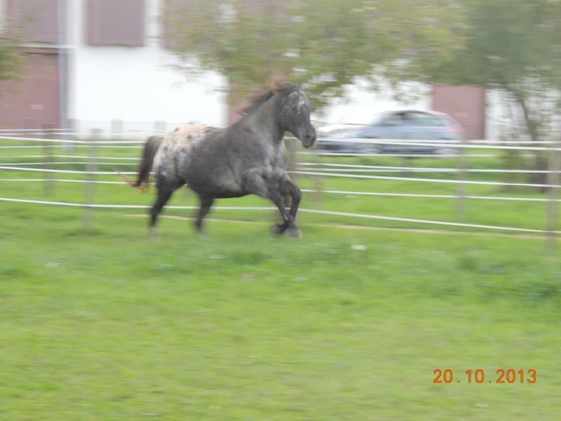 Mes chevaux, un mélange d'un peu tout le monde! - Page 8 Undy_111