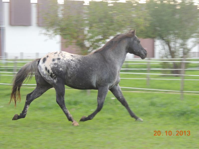 Mes chevaux, un mélange d'un peu tout le monde! - Page 8 Undy_112