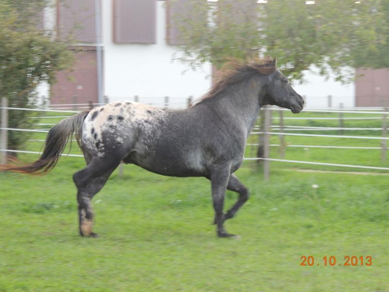 Mes chevaux, un mélange d'un peu tout le monde! - Page 8 Undy_113