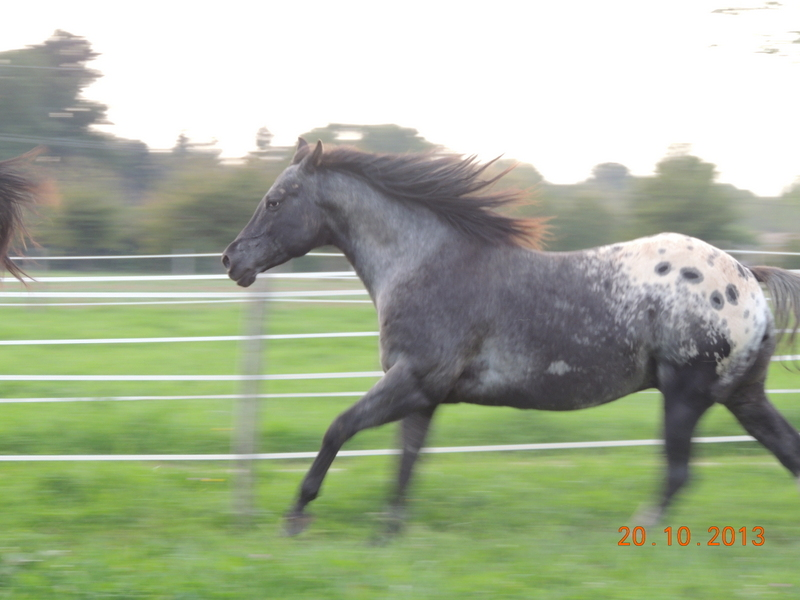 Mes chevaux, un mélange d'un peu tout le monde! - Page 8 Undy_114