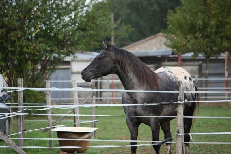 Mes chevaux, un mélange d'un peu tout le monde! - Page 8 Undy_116