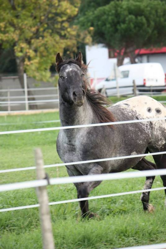 Mes chevaux, un mélange d'un peu tout le monde! - Page 8 Undy_117