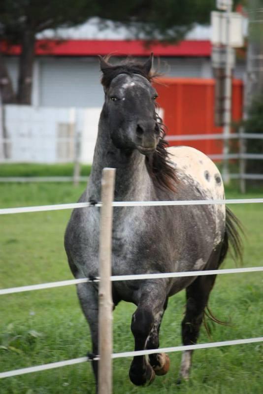 Mes chevaux, un mélange d'un peu tout le monde! - Page 8 Undy_213