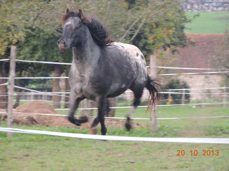 Mes chevaux, un mélange d'un peu tout le monde! - Page 8 Undy_610