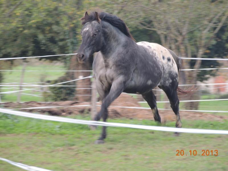 Mes chevaux, un mélange d'un peu tout le monde! - Page 8 Undy_710