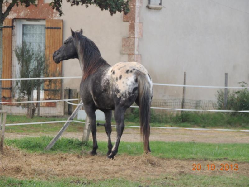 Mes chevaux, un mélange d'un peu tout le monde! - Page 8 Undy_810