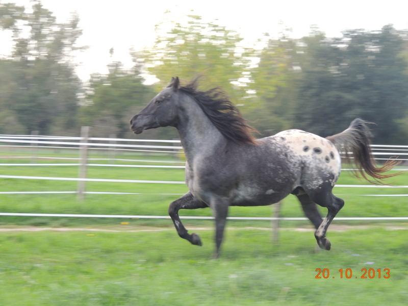 Mes chevaux, un mélange d'un peu tout le monde! - Page 8 Undy_910