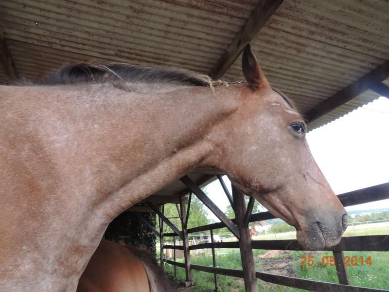 Les chevaux de l'Appaloosa IJ Farm - Page 2 Uppy15