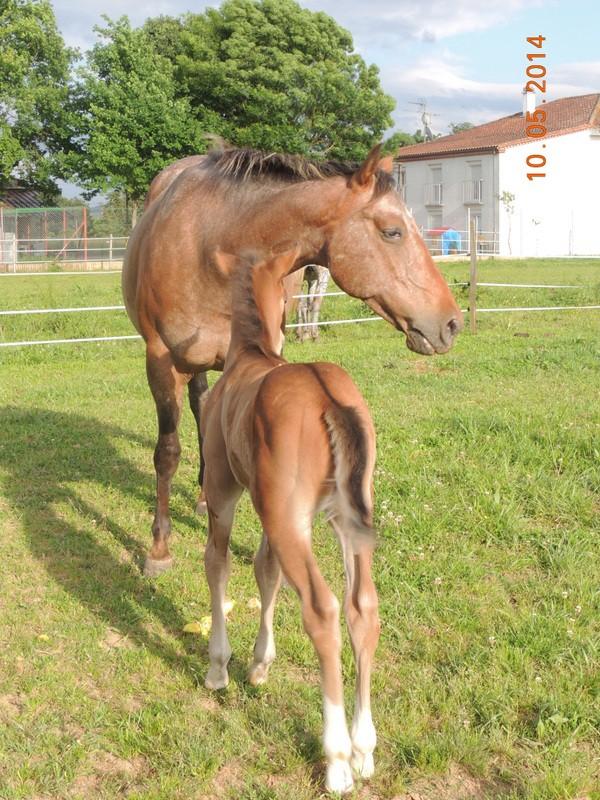 Mes chevaux, un mélange d'un peu tout le monde! - Page 9 Uppy_e10