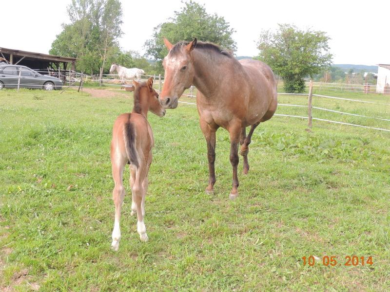 Mes chevaux, un mélange d'un peu tout le monde! - Page 9 Uppy_e12