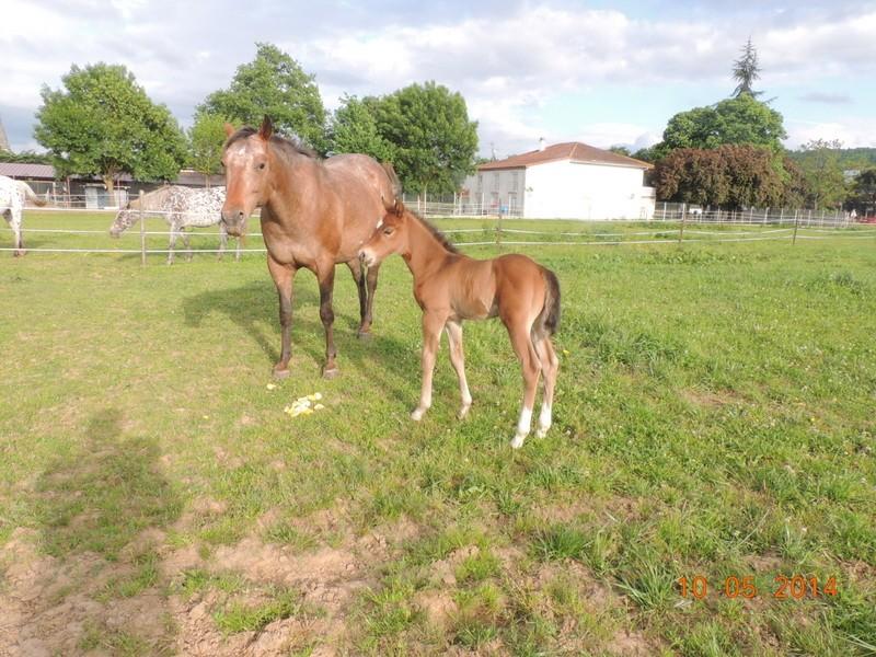 Mes chevaux, un mélange d'un peu tout le monde! - Page 9 Uppy_e15