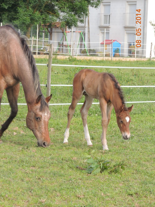 Mes chevaux, un mélange d'un peu tout le monde! - Page 9 Uppy_e18
