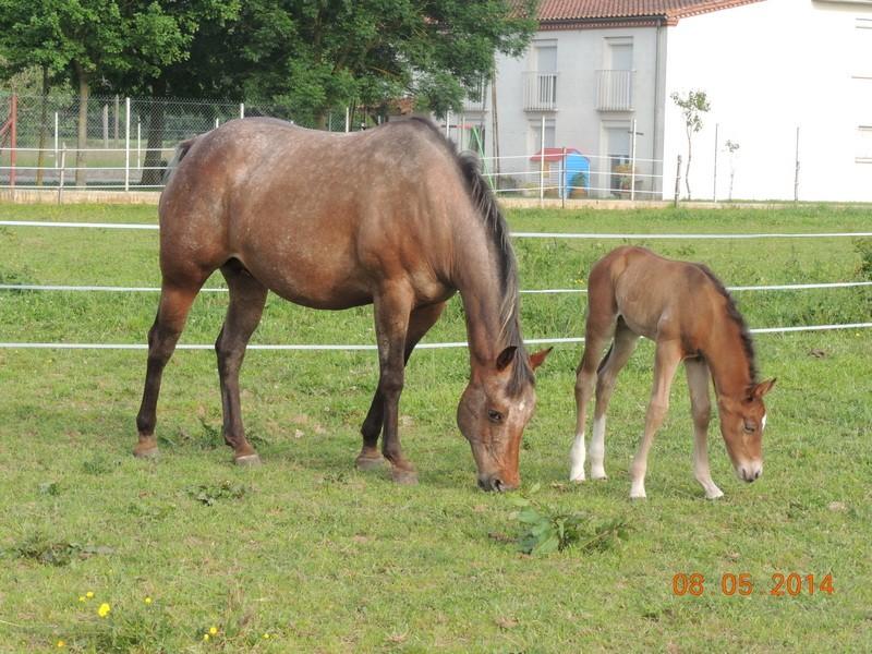 Mes chevaux, un mélange d'un peu tout le monde! - Page 9 Uppy_e19