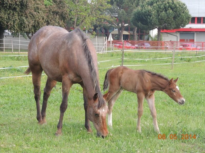 Mes chevaux, un mélange d'un peu tout le monde! - Page 9 Uppy_e21