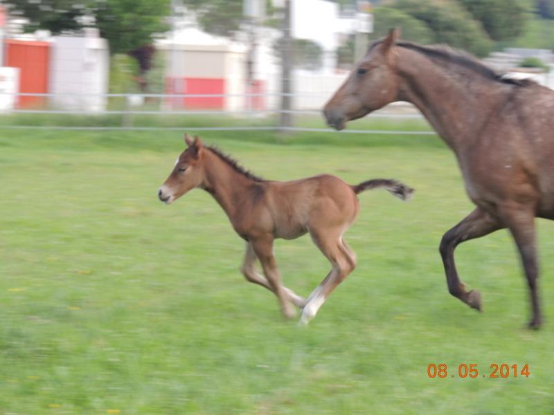Mes chevaux, un mélange d'un peu tout le monde! - Page 9 Uppy_e22