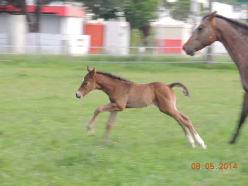 Mes chevaux, un mélange d'un peu tout le monde! - Page 9 Uppy_e23