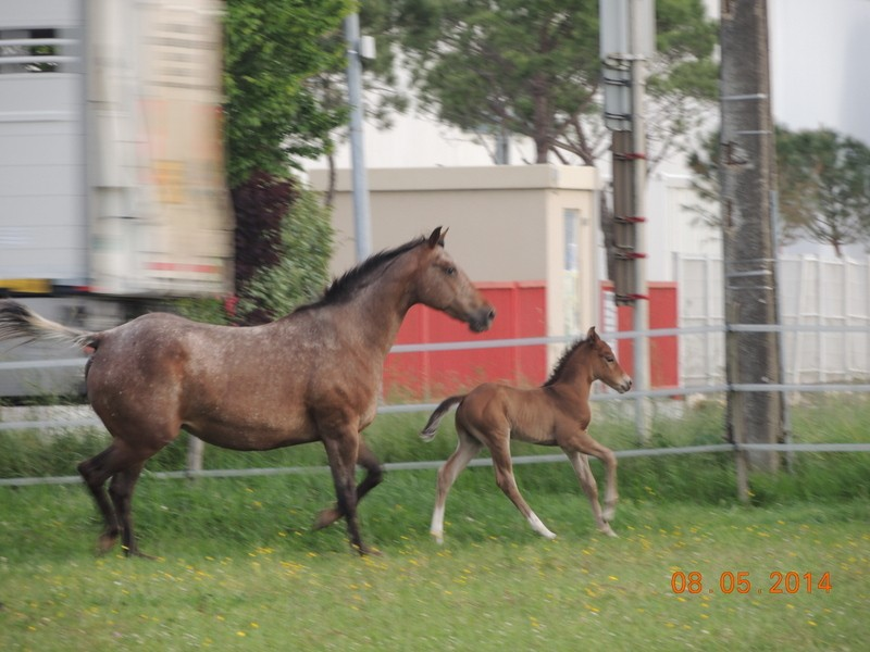 Mes chevaux, un mélange d'un peu tout le monde! - Page 9 Uppy_e24
