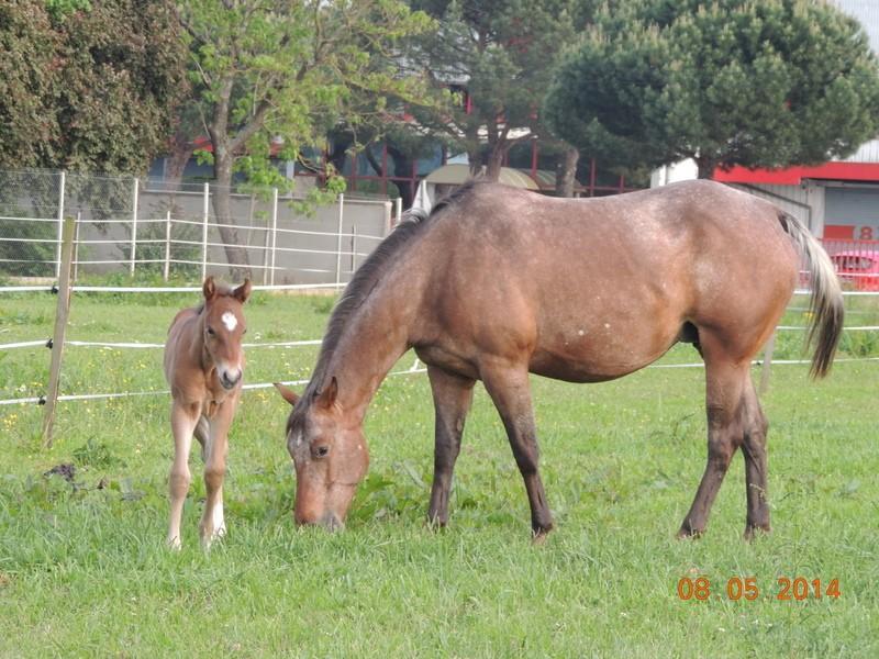 Mes chevaux, un mélange d'un peu tout le monde! - Page 9 Uppy_e25